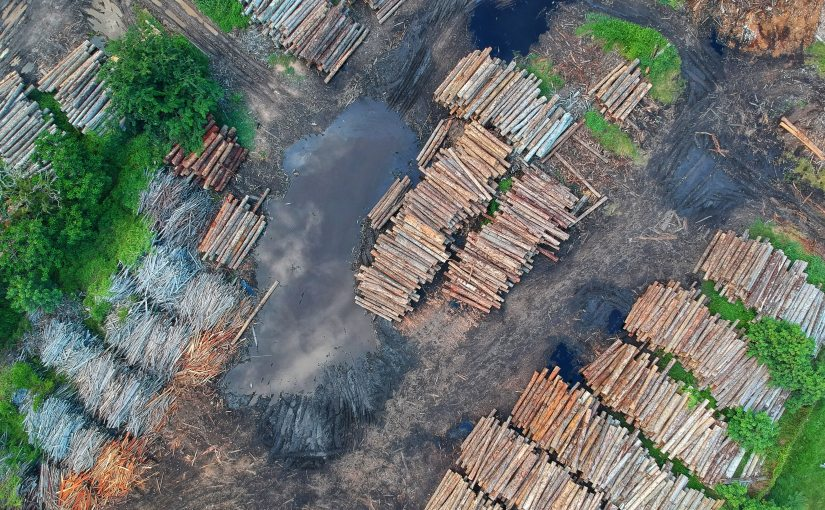 EU members demand increased action on 2020 UN deforestation goal