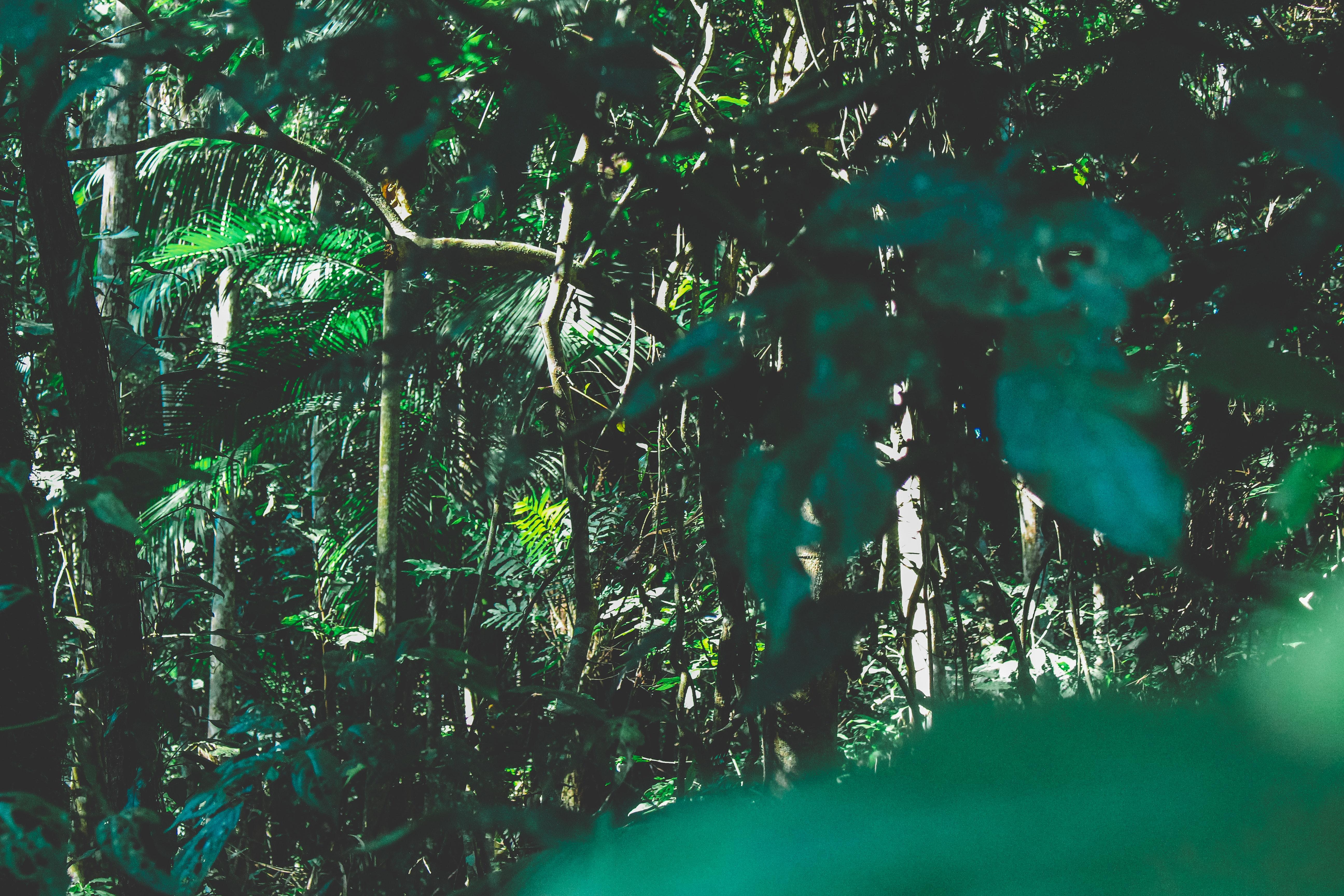 branches-brazil-environment-1225236.jpg
